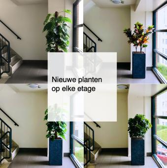2021-09-20, nieuwe planten op elke etage - de Bergen V